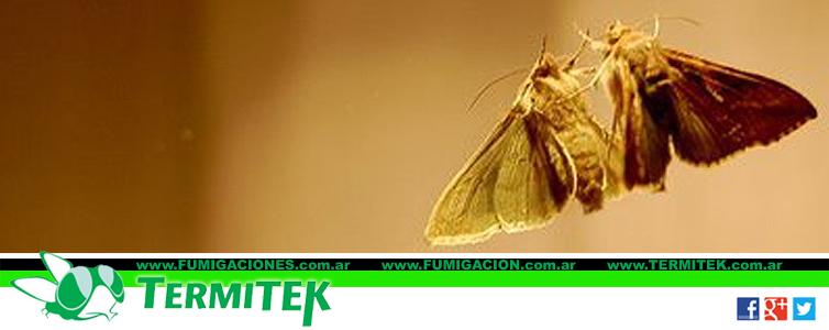 Eliminar polillas en casa salud en casa existen insectos - Como eliminar plaga de moscas en casa ...
